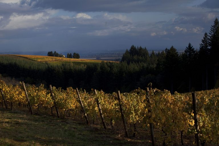 Lange Estate Vineyard In Autumn.